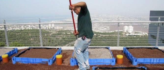 Unos 48 módulos experimentales están siendo plantados en el Centro de Ecología Techos Verdes de la U. de Haifa. [Créditos: Israel21c.org]