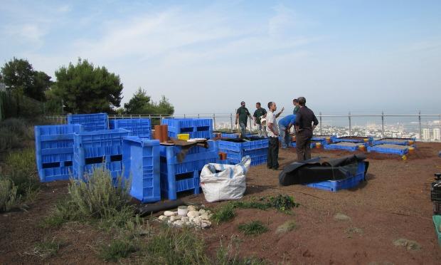 El equipo israelí también está estudiando cómo conservar especies de plantas e insectos en entornos urbanos. [Fuente: Israel21c.org]